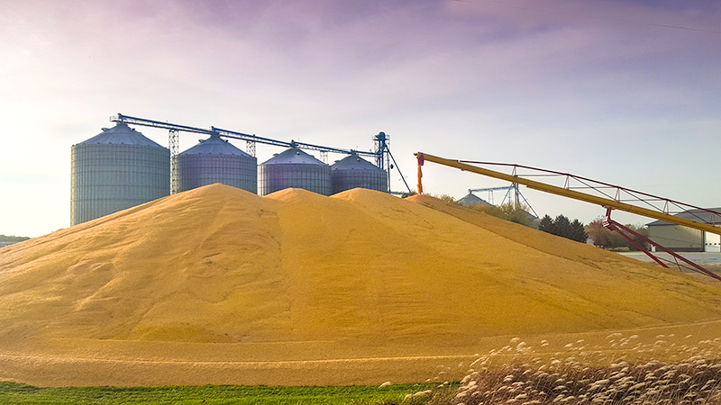A bountiful harvest creates this dramatic scene as a  mountain of corn rises up near these grain bins in western Iowa.