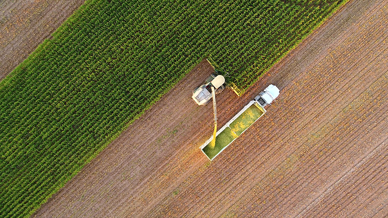 Tractor and farm machines harvesting corn in Autumn, breathtaking aerial view.